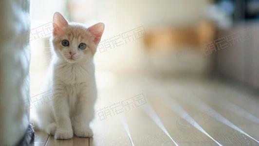 猫咪怪癖的原因解析